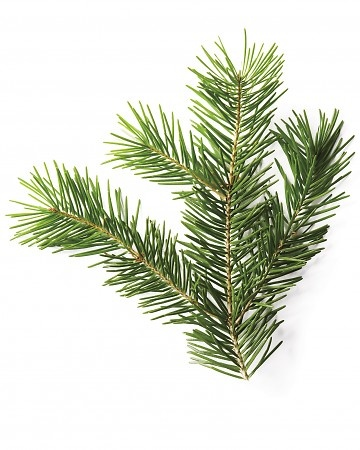 Christmas Tree Glossary - Douglas Fir
