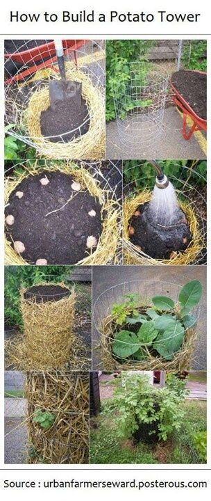 make the wire cage, line the bottom with about 3 inches of straw then keeping straw around the edges add about 4 inches of compost then your seed potatoes eyes up. cover with a few inches of compost. as the plants grow cover the bottom 1/3 of the plant with compost (hilling it up). Potatoes don't grow down from the seed potatoes, they grow above them. So the taller your potato plant grows, the deeper you can hill the soil, the more potatoes you get. continue until the potato flowers and then…