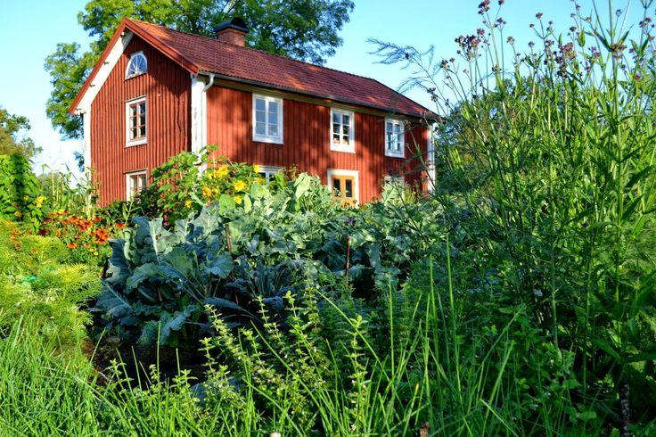 My kitchen garden in Sweden. August, 2014. #garden #gardening #kitchengarden #growfood #trädgård #odla  #vegetables