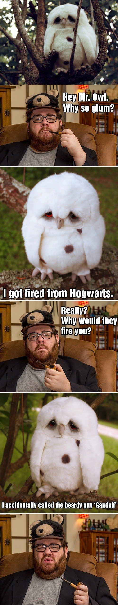 Hey Mr. Owl. Why so glum?: Glum, Hogwarts, Poor Owl, Funny Stuff, Funnies, Humor, Harry Potter, Owls, Sad Owl
