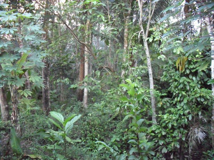 (not exactly) a tropical rain forest
