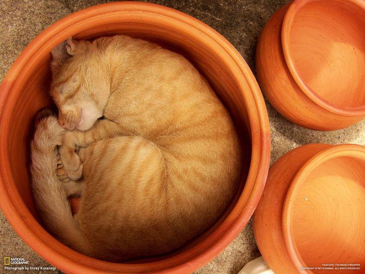 Sleepy Kitten HD Wallpapers