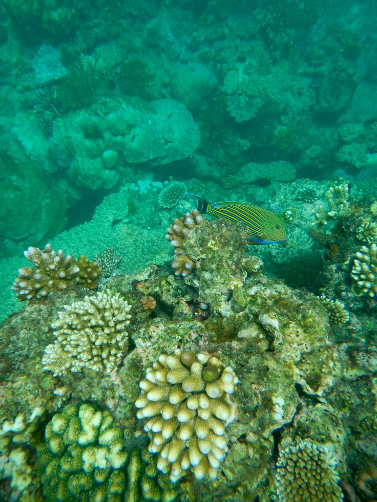 Coraux de la grande barrière de corail, Australie / Great Barrier Reef and corals, Australia