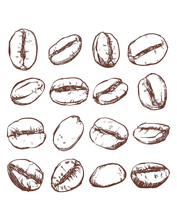 80% Off Sale Coffee bean Isolated Hand drawn vector. Hand drawn Coffee vector…