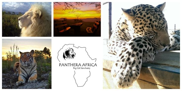 Sunset picnic's. First Saturday of every month at Panthera Africa
