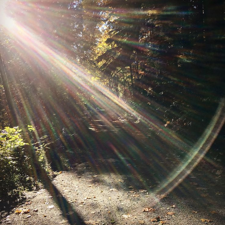 Mossom Creek Sunbeam Forest Road by NyxStudioArt