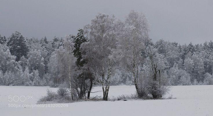 снежный наряд. by yact-viktor