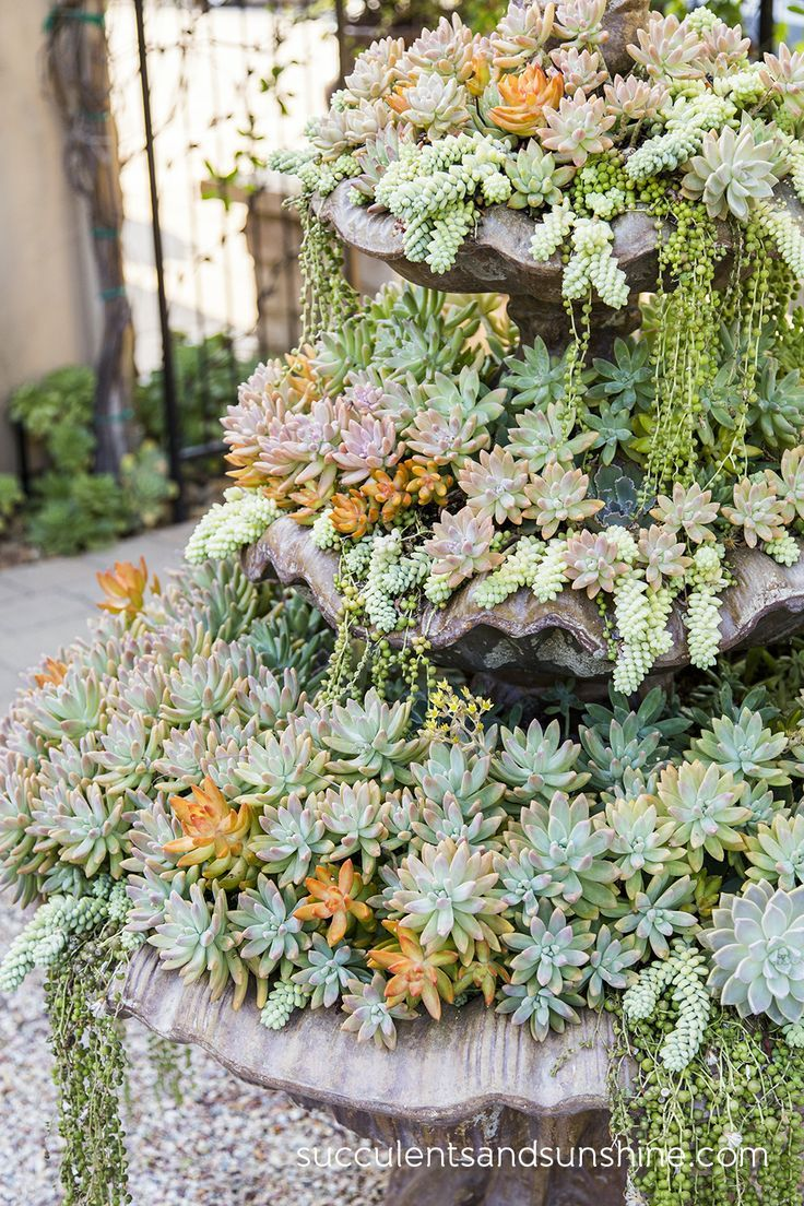 (via Pin by The Succulent Perch on Gardens With Succulents | Pinterest)