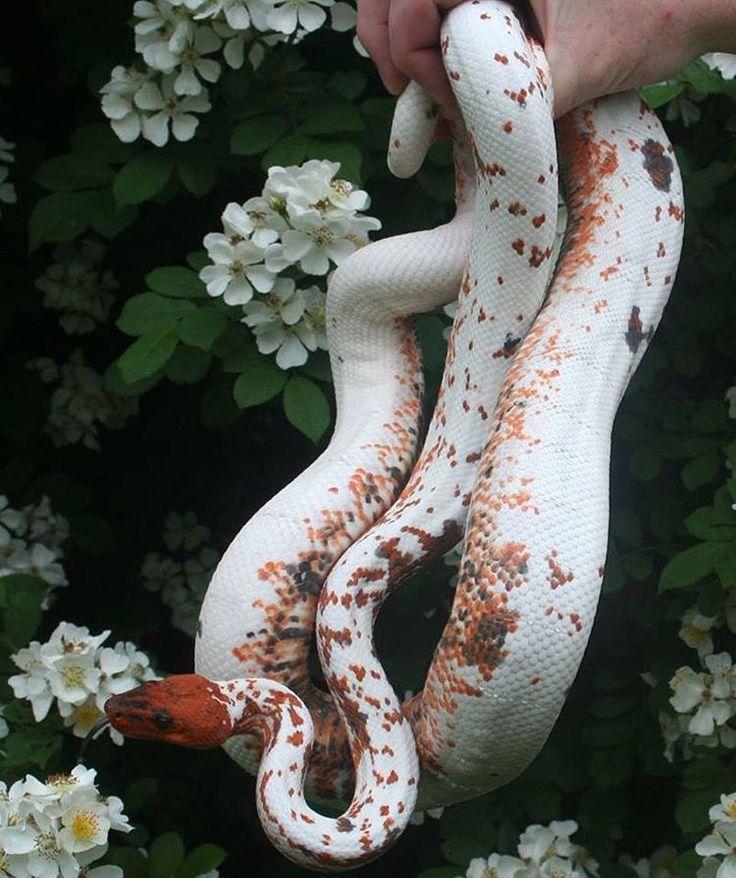 картинки змеи с цветами самое захватывающие