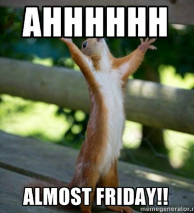 Funny Animal Friday Meme : Ahhhhh almost friday day thursday quotes