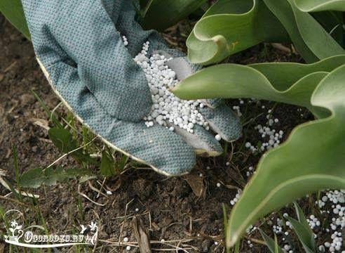 Азот для растений. Как узнать и вылечить дефицит азота?    Даже только начинающий дачник знает, что азот для растений очень важная составляющая для хорошего плодоношения и общего здоровья. Поэтому определять по внешнему виду нуждается ли растение в подкормке азотом очень важно. Если вы еще не умеете это делать, мы расскажем вам как это осуществить правильно. http://ogorodko.ru/category/ogorodnyye-khitrosti/pochva-i-udobreniya   3 причины, по которым ваши растения могут испытывать дефицит…