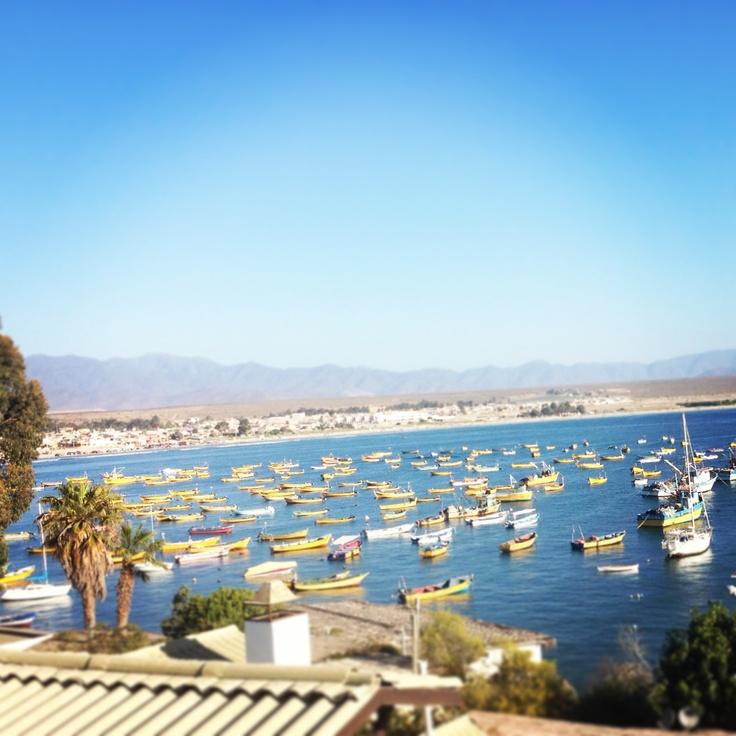 Barcos pesqueros en  Tongoy, Chile