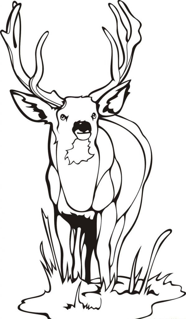Free Printable Deer Coloring Pages For Kids Deer Coloring Pages Animal Coloring Pages Skull Coloring Pages