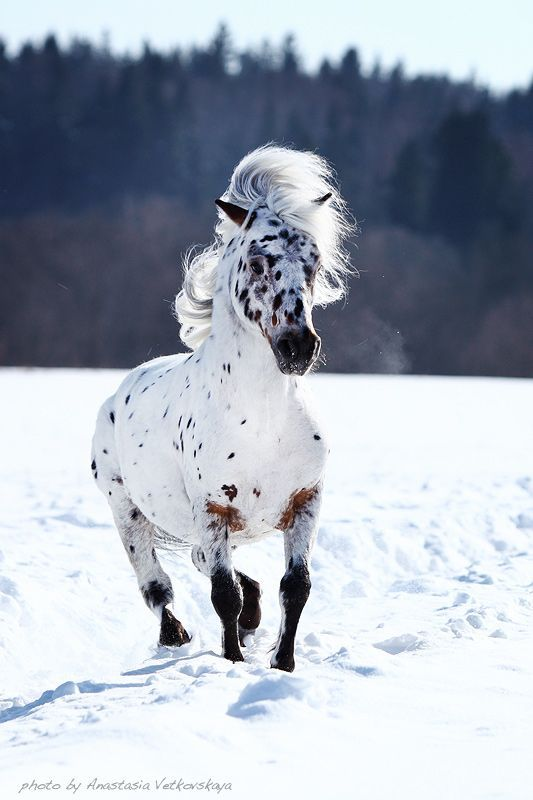 ".I love this horse shows his beauty in the snow. Beautiful.....Signed: Jude///// ""He has that wind blown look!  He's beautiful!"" nk"