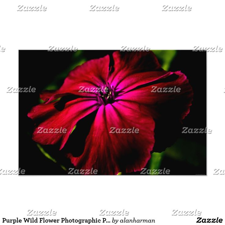 Purple Wild Flower Photographic Print 18 best