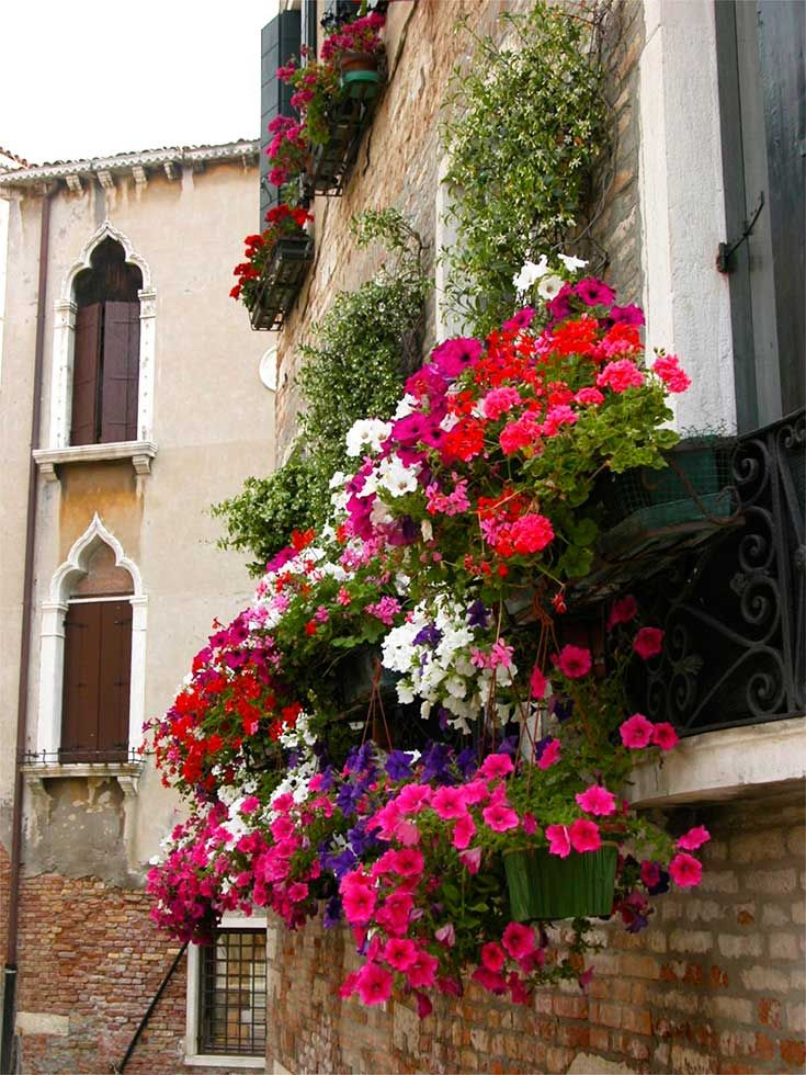 Italian Flower Window Box Venice Windowboxes Patricia