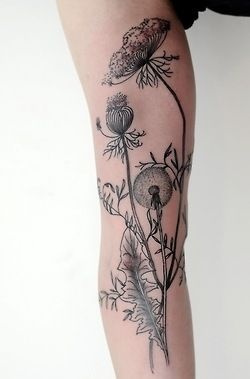 Illustration NYC tattoos inked tattoo ink san francisco New Zealand flower tattoo Scientific Illustration black and grey Dotwork Auckland Flower tattoos flower illustration Nyc tattoo feminine tattoos new york tattoo tatouage femme victorjwebster victor mckenney sf tattoo