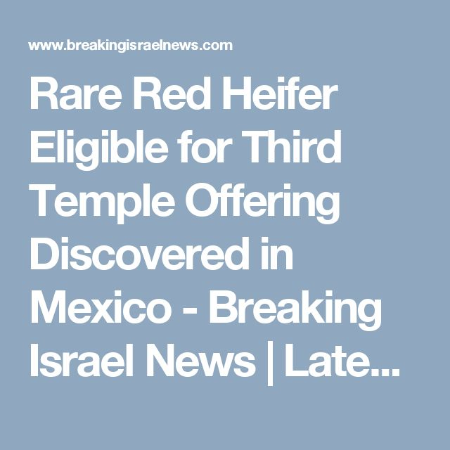 Rare Red Heifer Eligible for Third Temple Offering Discovered in Mexico - Breaking Israel News | Latest News. Biblical Perspective.
