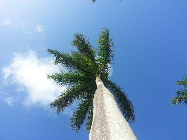 Palm Beach, Florida. Look up.