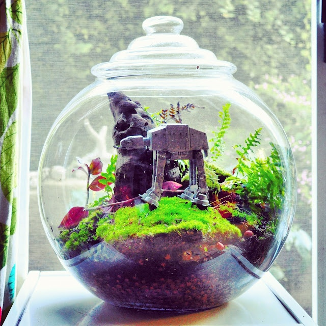 At-At terrarium for the larger boy.  They would be in 7th heaven with these terrariums!