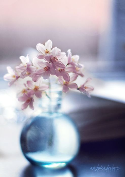 ... 2016 - Rose Quartz & Serenity sur Pinterest  Pastel, Quartz rose et