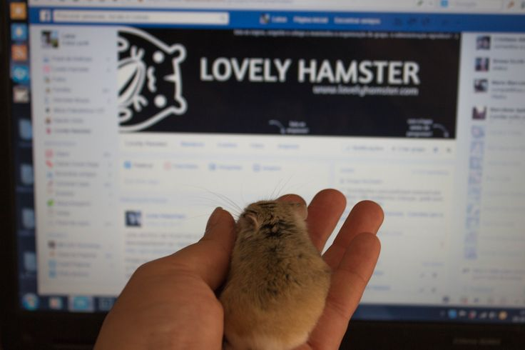 #site #facebook #lovelyhamster