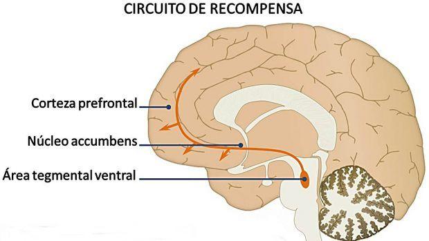 Cómo funciona el sistema de recompensa del cerebro?