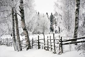 White landscape.