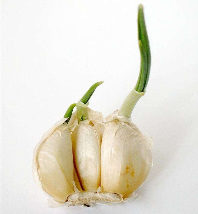 10 vegetales que puedes plantar en tu casa para que nunca te falten en la cocina. Ajo