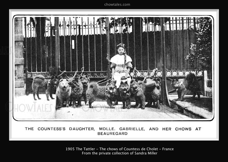 1905 The Tatler- France - The chows Countess de Cholet including Ch. Shylock - CHOWTALES