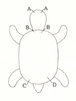turtle pattern,  this website has more than one turtle pattern.  A must visit.