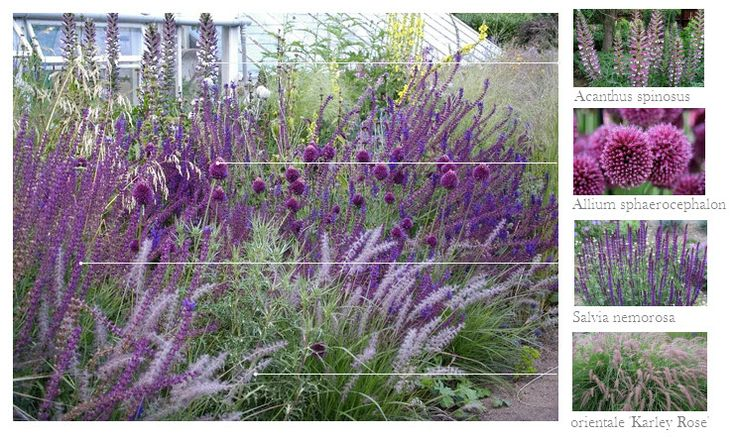 363 best images about plant pairings on pinterest for Purple grasses for landscaping