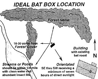 Ideal box location diagram for bat houses