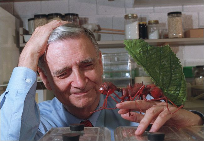"""Search until you find a #passion and go all out to excel in its expression."" — #EOWilson #quote: Thru Dr. Wilson's own passion, #ants, he has become a world-renowned biologist and naturalist, championing #biodiversity and campaigning for #conservation."