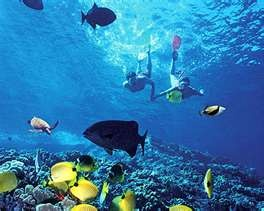 Snorkeling in the Bahamas. Planning on crossing this off the list this October on my cruise :)