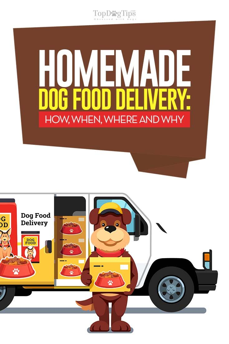10 Homemade Dog Food Delivery Services From Around The Globe Dog