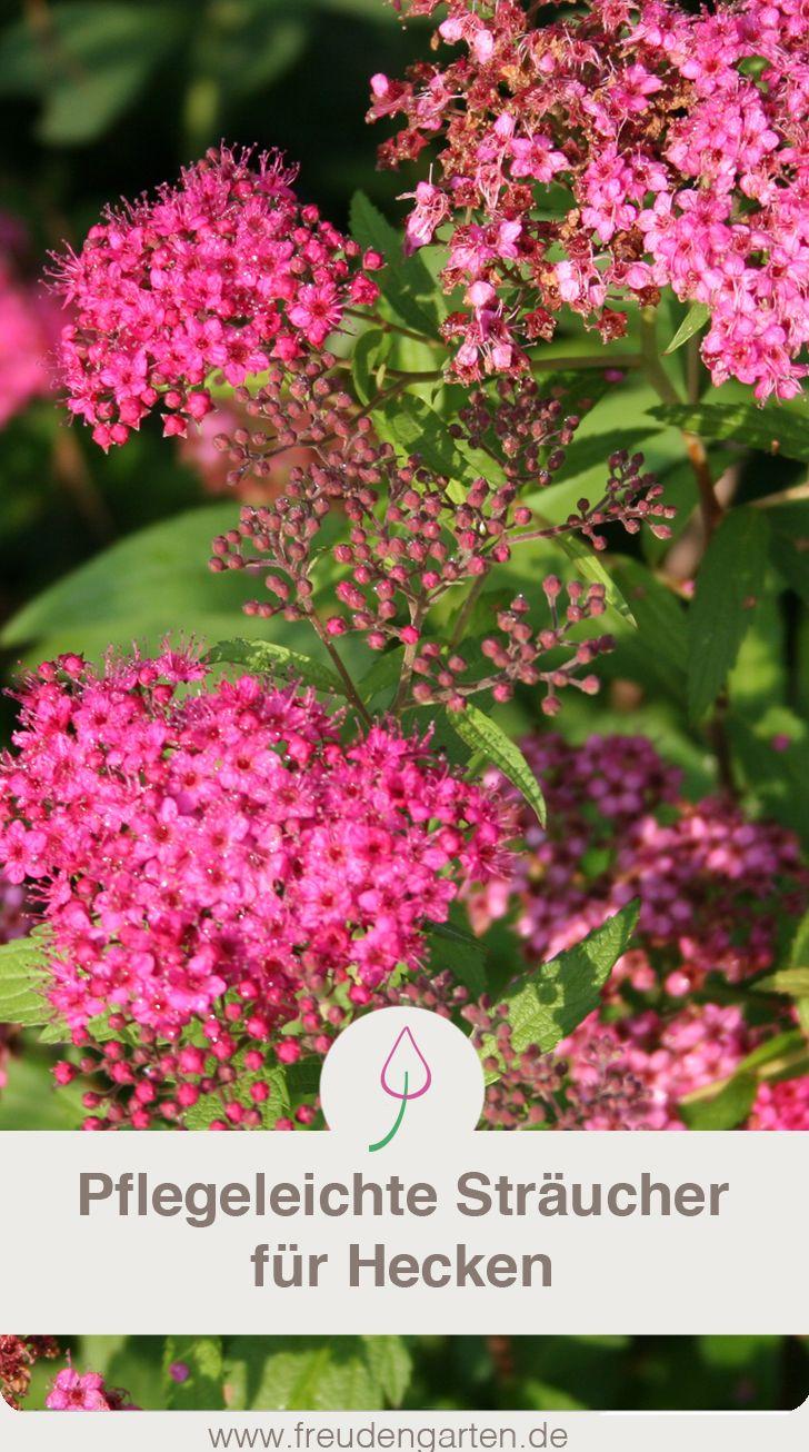 Pflegeleichte Hecke Garten Pflanzen Pflegeleichte Pflanzen