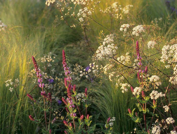Jinny Blom: Laurent-Perrier Garden, Chelsea Flower Show 2007