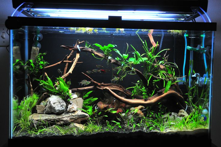29 gallon freshwater aquarium setup - Google Search