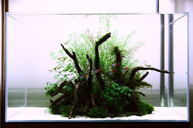 1000+ images about Aqua Auquarium scaping Fish Tanks on Pinterest ...