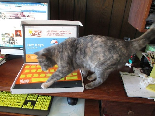 Catstarter Shows Interesting Keyboard For Your Cat To Sleep On
