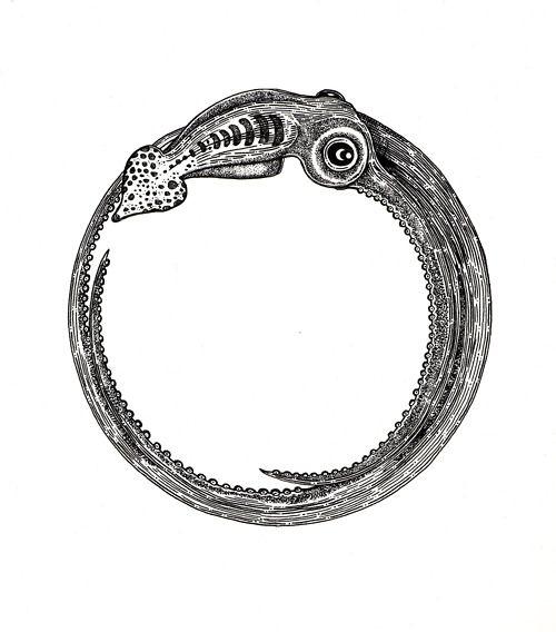 Ouroboros SquidTattoo Ideas, Sea Life, Assorted Art, Squid Rings, 20 000 League, Squid Illustration, Ouroboros Squid, Sinful Eaters, Illustration Art