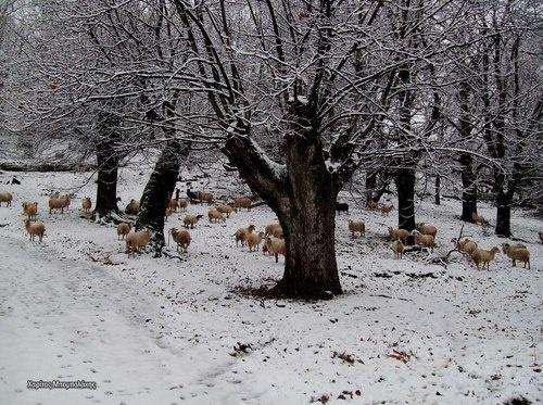 Ο Χειμώνας είναι εδώ