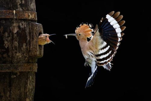 Photo: Giovanni Frescura: Photography Awards, Photos, Sony, Giovanni Frescura, Awards 2012, Beautiful, Birds, World Photography, Animal