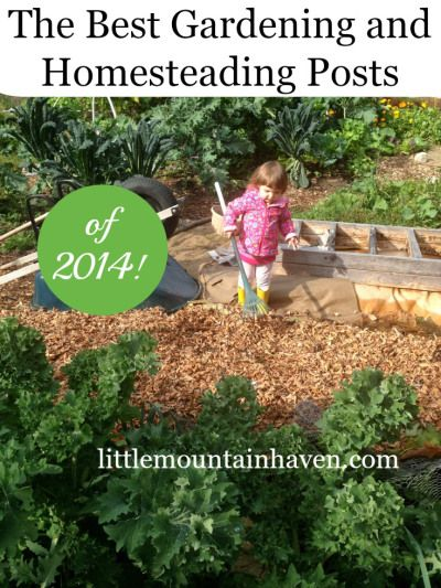 The best gardening and homesteading posts of 2014