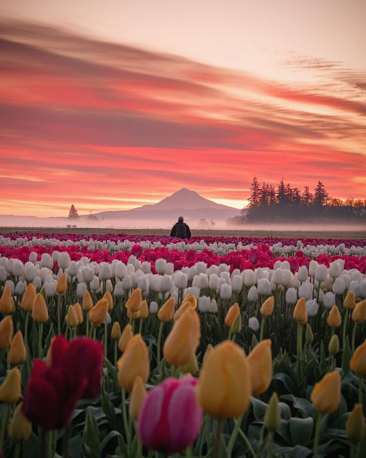Jake Egbert Captures The Beauty At The Wooden Shoe Tulip Festival In Oregon Photography Bhgflowers Beautiful Landscapes Beautiful Nature Nature Photography