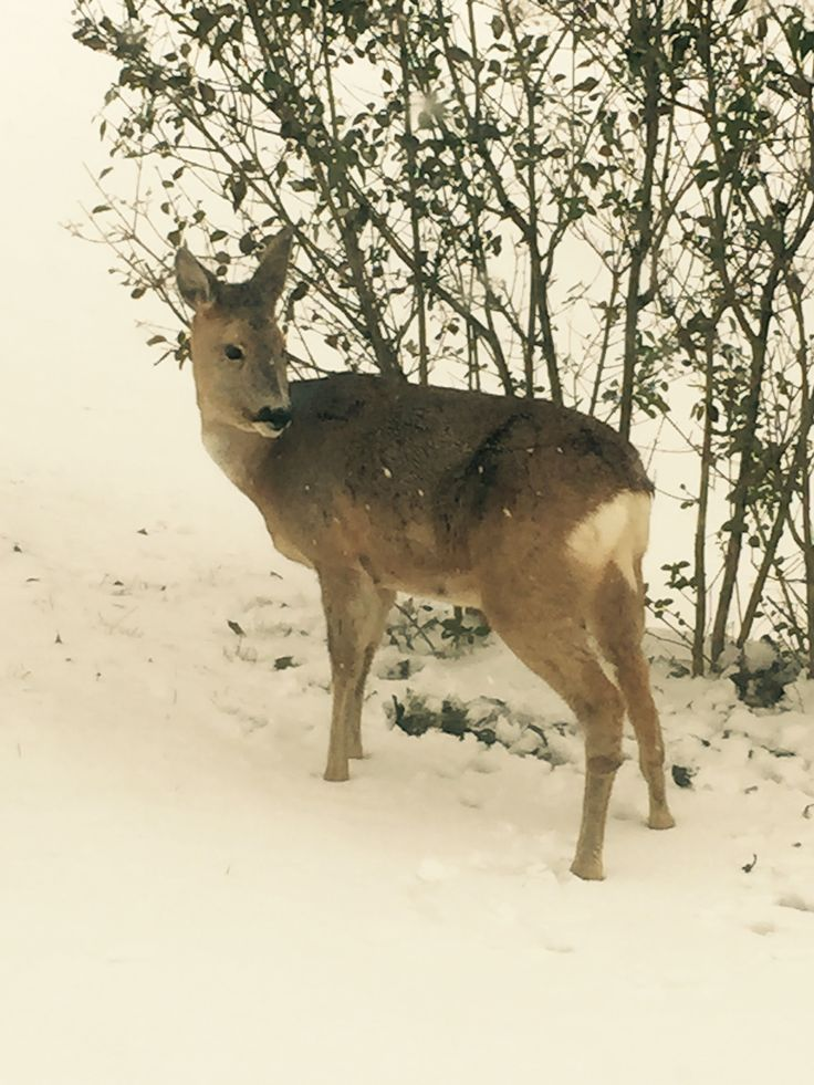A visitor in the garden. So beautiful!