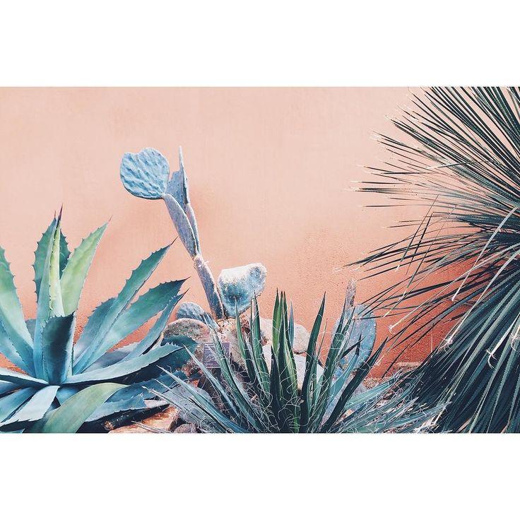 #agave #cacti #cactus #plants #hortusbotanicus #green #orange #contrast #beauty #amsterdam #dessert #woestijn #woestijnplanten #plantlove #greenlove by hyperjulie March 29 2016 at 07:54AM