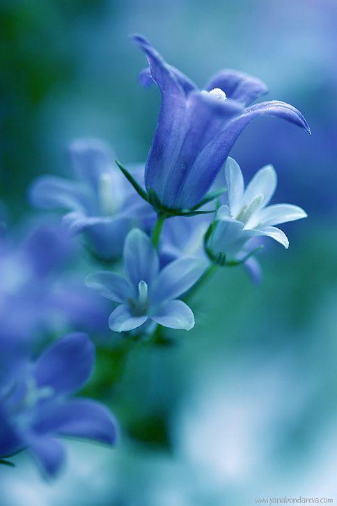Blue bell-shaped flower