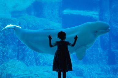 Inside the Vancouver Aquarium: Belugas at the Vancouver Aquarium